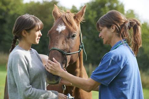 client and horse with doctor